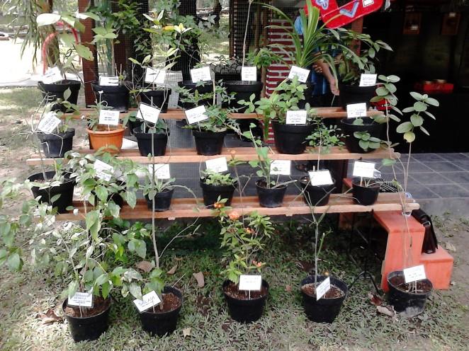Tanaman-tanaman Indonesia di depan galeri