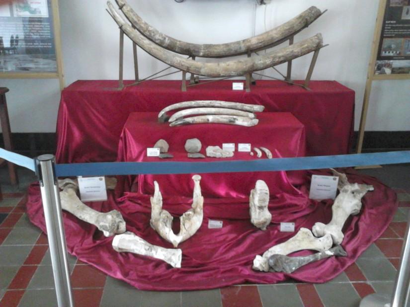 Fosil yang dipamerkan di ruang tengah