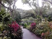 Inside the Foliage Garden