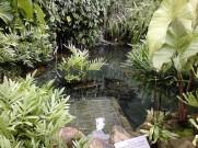 Kolam kecil