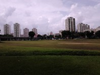 The grass field and skyscrapers at the background