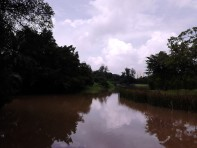 The brown river along the Gardens