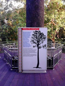 Information board on Jelutong Tree