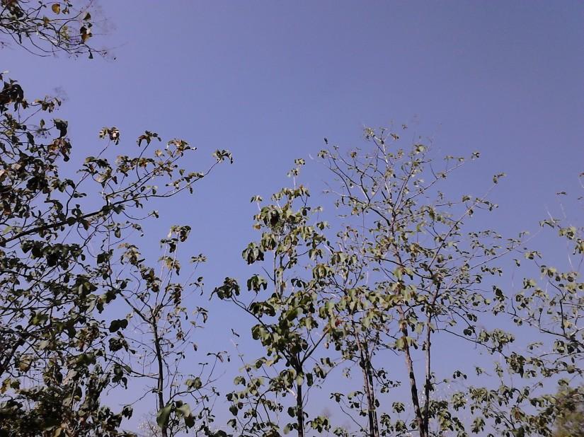 Langit biru yang bersih, cerah, dan... PANAS!