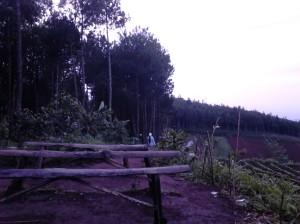Bangku-bangku kayu