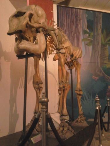 Kerangka binatang purba