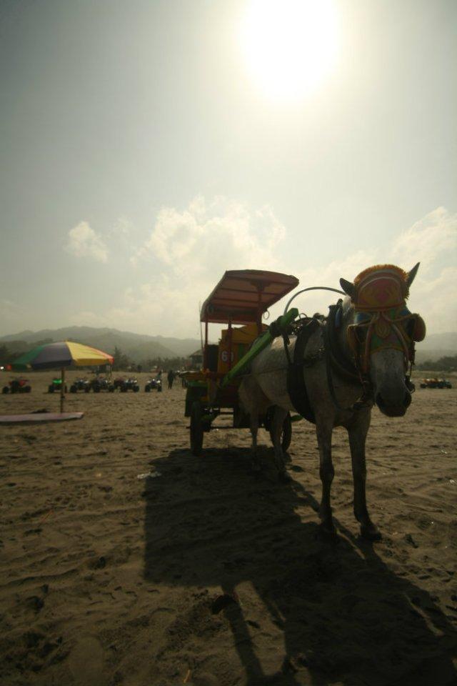 Ada andong di Pantai Parangtritis, Yogyakarta
