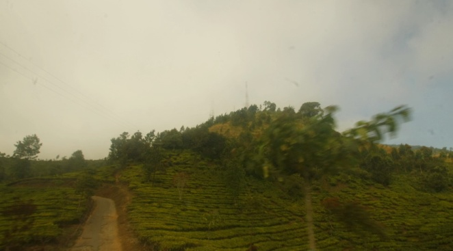 Hamparan hijau menuju basecamp Pemancar, Gunung Cikuray