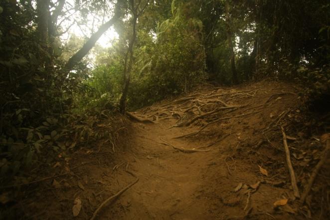 Kondisi medan pendakian Gunung Cikuray