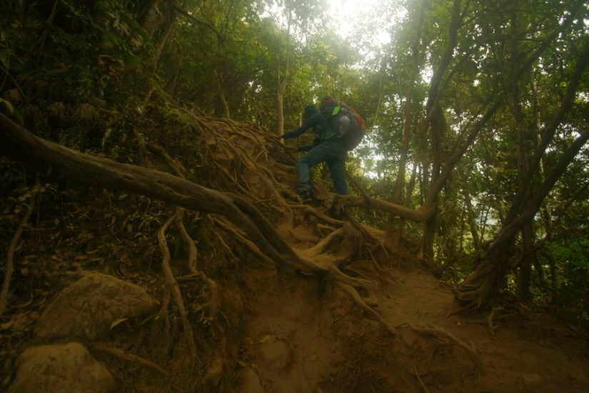 Johan, climbing the roots - Gunung Cikuray