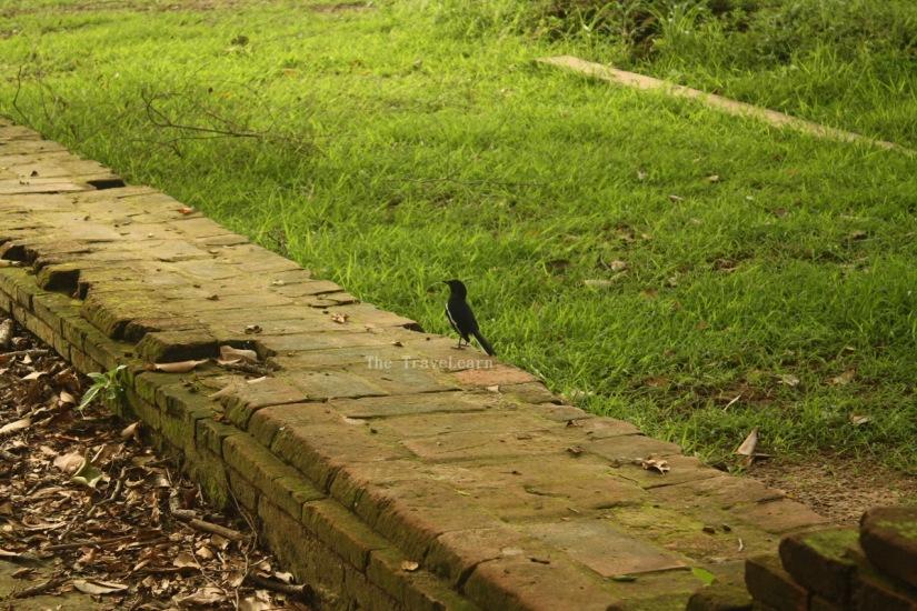 A bird at Wat Phra Si Sanphet
