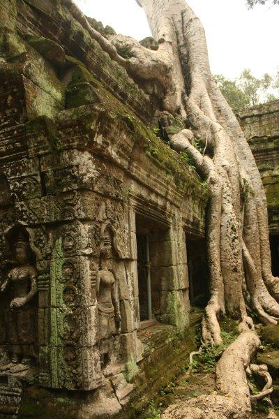 Ta Prohm and the Banyan Tree