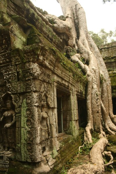 Ta Prohm and the Banyan Tree