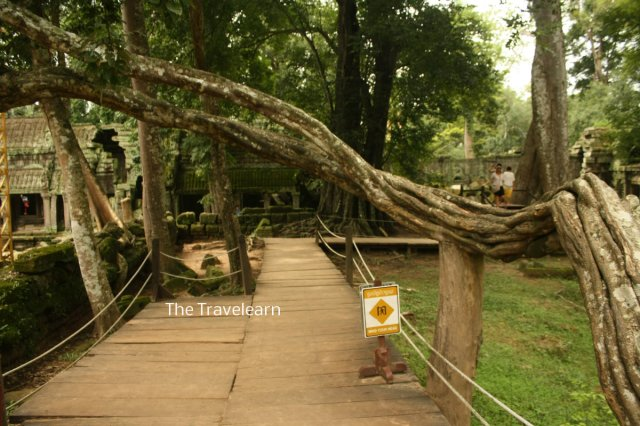 Tourists path at Ta Prohm