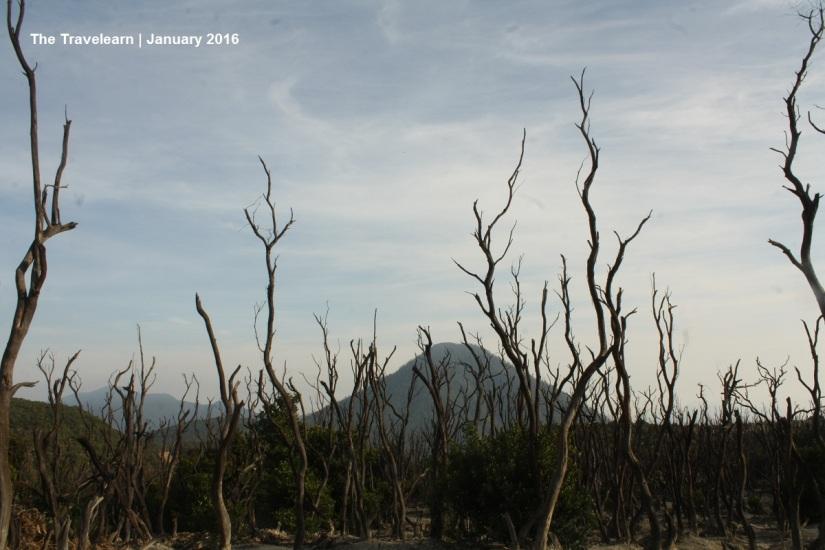 Hutan Mati, Gunung Papandayan