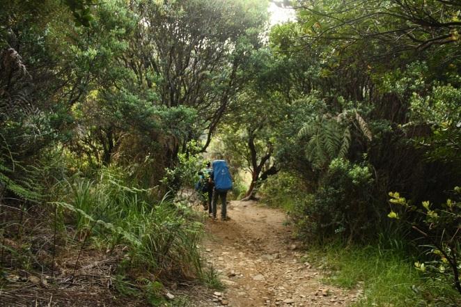 Memasuki area hutan