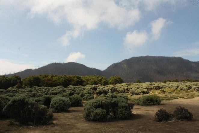 Tegal Alun, Gunung Papandayan