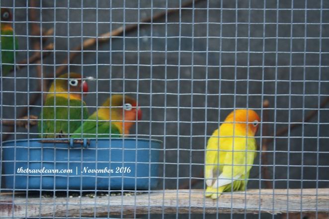 Kebun binatang kecil di rooftop Grand Tjokro
